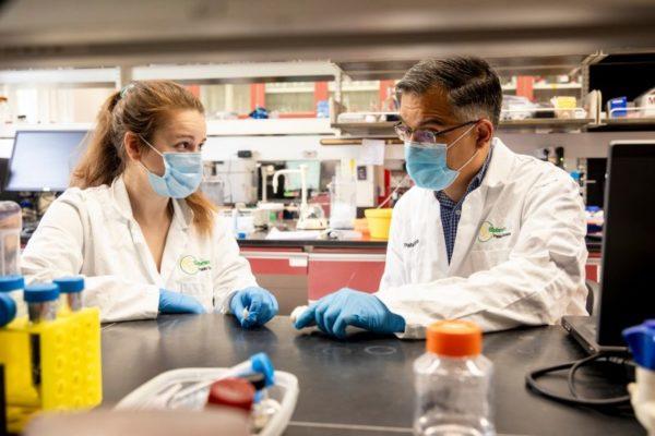 cientistas pesquisando o alho