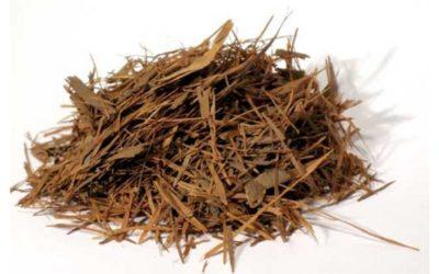 casca do barbatimão trituradas