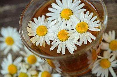 xícara com camomila em chá