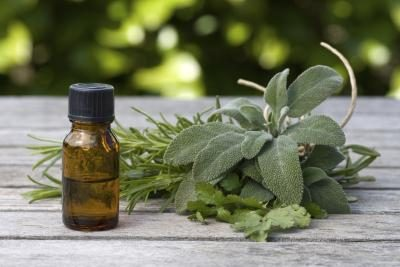 plantas e oleo de melaleuca