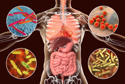 ilustração dos micróbios no corpo